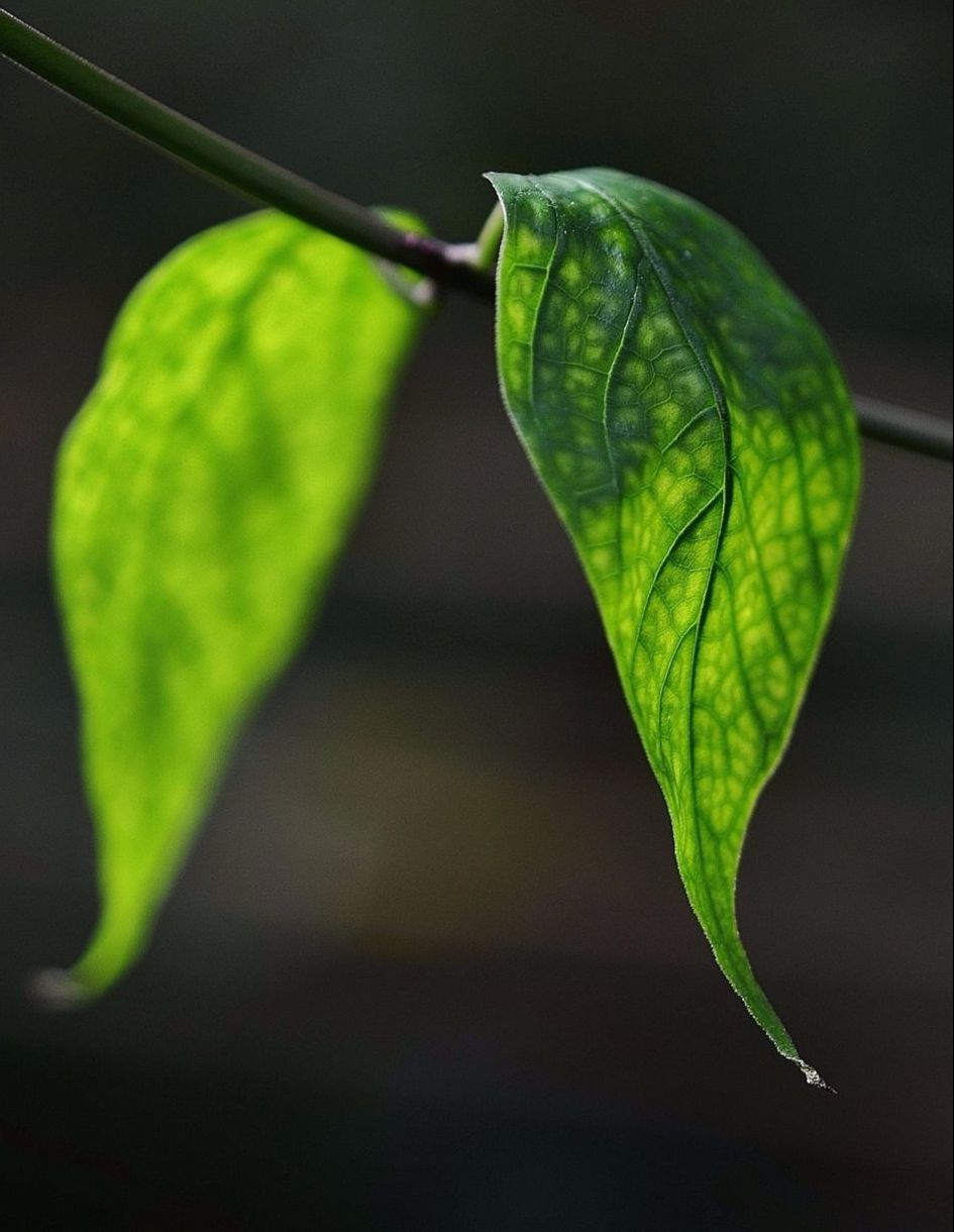 Ein grünes Pflanzenblatt