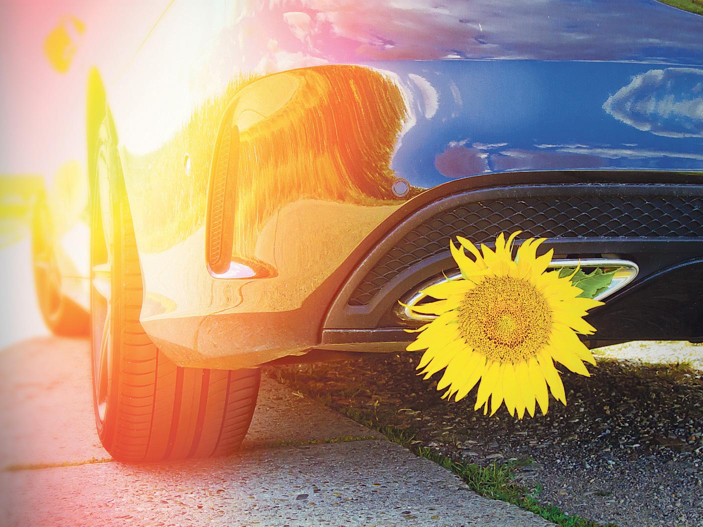 Ein Auto mit einer Blume im Auspuff. Thema: E-Fuels