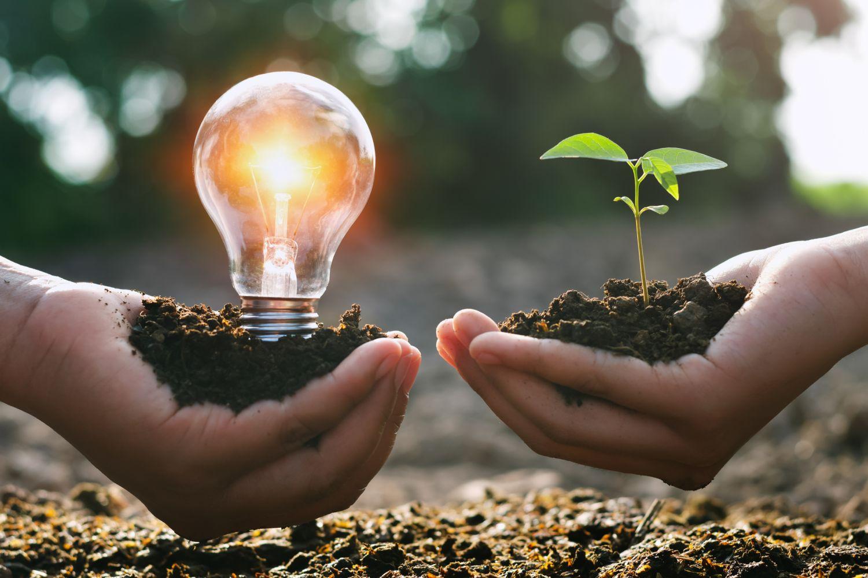 Darstellung erneuerbarer Energie: zwei Hände, die einmal eine Glühbirne, einmal eine Pflanze halten.