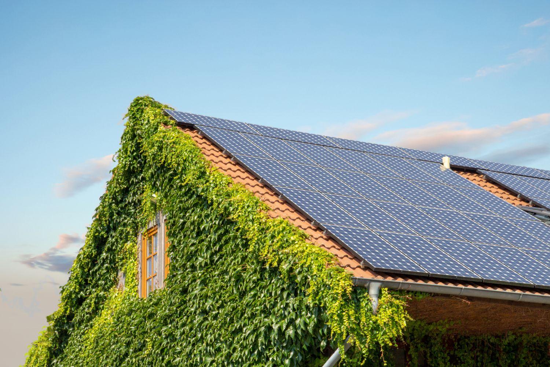 Ein Hausdach mit Efeu bewachsen und Sonnenkollektoren versehen. Thema: Wärmeversorgung